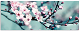 Closeup Blossom III Posters