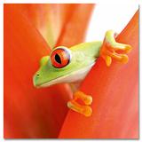 Crazy Frog II Art