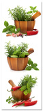 Fresh Flavoring Spices & Herbs Posters