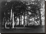 Fontainebleau, 1849 - Study of Trees and Pathways Stretched Canvas Print by Gustave Le Gray