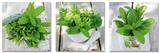 Fresh Green Herbs In Summer Plakat