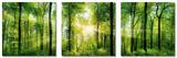 Set Green Sunshine Poster