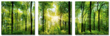 Set Green Sunshine Kunstdruck