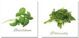 Set Different Herbs Posters