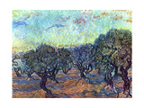 The Olive Grove, 1889 Metal Print by Vincent van Gogh