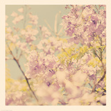 Flowers in Bloom Photographic Print by Myan Soffia