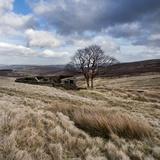 Rural Countryside Landscape in England Fotografisk tryk af Craig Roberts