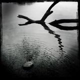 Branch in Water Fotografisk tryk af Craig Roberts