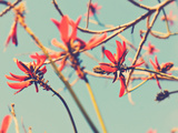 Flowers in Bloom on a Tree Photographic Print by Myan Soffia