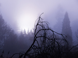 Foggy Day with Trees Photographic Print by Sharon Wish