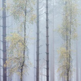 Trees in English Woodland Photographic Print by David Baker