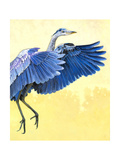Great Blue Heron Giclee Print by Max Hayslette