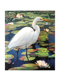 Great Egret Giclee Print by Max Hayslette