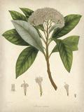 Vintage East Indian Plants V Prints by Maria Mendez