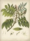 Vintage East Indian Plants II Pôsters por Maria Mendez