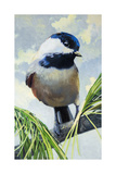 Black-Capped Chickadee Poster by Max Hayslette