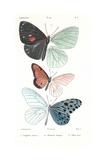 Lepidopteres 1, Emile Blanchard Prints by  Porter Design
