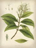 Vintage East Indian Plants IV Pôsters por Maria Mendez