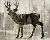 Camouflage Animals - Deer Prints by Tania Bello