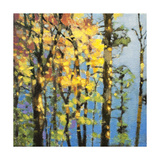 Autumn in the Olympics Giclee Print by Max Hayslette