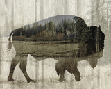 Camouflage Animals - Bison Plakater av Tania Bello
