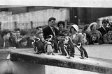 Penguins at London Zoo, 1959 Fotografisk tryk af  Tanner