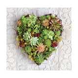 Succulent Heart Giclee Print by Howard Shooter
