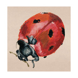 Ladybird Giclee Print by Lily Greenwood