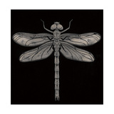 Dragonfly Giclee Print by Barry Goodman