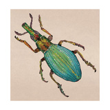 Weevil Giclee Print by Lily Greenwood