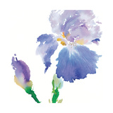 Iris Giclee Print by Summer Thornton