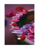 Alizarin Crimson III Giclee Print by Sandra Lane