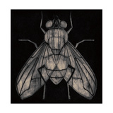 Fly Giclee Print by Barry Goodman