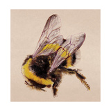 Bee Giclee Print by Lily Greenwood