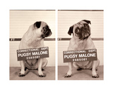 Pugsy Malone Giclee Print by Jim Dratfield