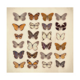 Butterfly Collection Giclee Print by Ian Winstanley