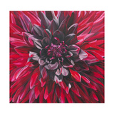 Fabulous Black Wizard Dahlia Giclee Print by Sarah Caswell