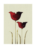 Tulips II Giclee Print by Nicola Evans
