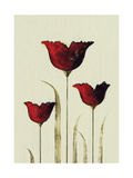 Tulips III Giclee Print by Nicola Evans
