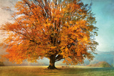 Autumn's Passion Print by Irene Weisz