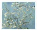 Almond Blossoms, 1890 Láminas por Vincent van Gogh