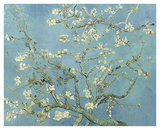 Almond Blossoms, 1890 Prints by Vincent van Gogh