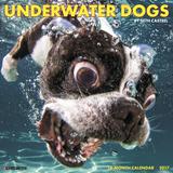 Underwater Dogs - 2017 Calendar Calendars