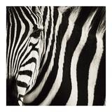 Camouflage I Prints by Susann Parker