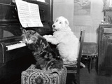 Cat and Dog Playing Piano Art by  Unknown