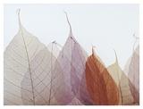 Cabernet Prints by Durwood Zedd