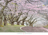 Blossom Hill Prints by James Gordon