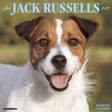 Just Jack Russells - 2017 Calendar Kalendere