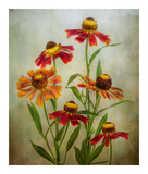 Cabaret Prints by Mandy Disher