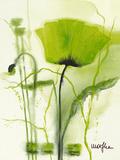 Coquelicot Vert II Prints by  Marthe